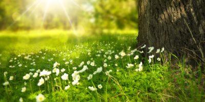 Komunikat prasowy IMGW-PIB: Pogoda na początek wiosny