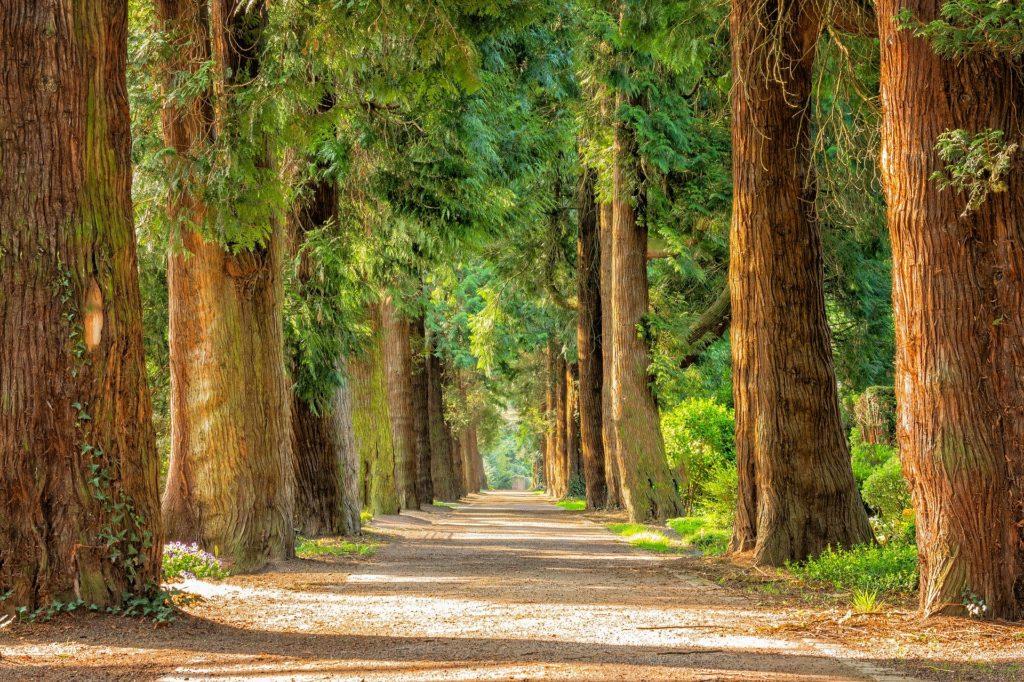 Read more about the article Drzewa w Polsce i na świecie