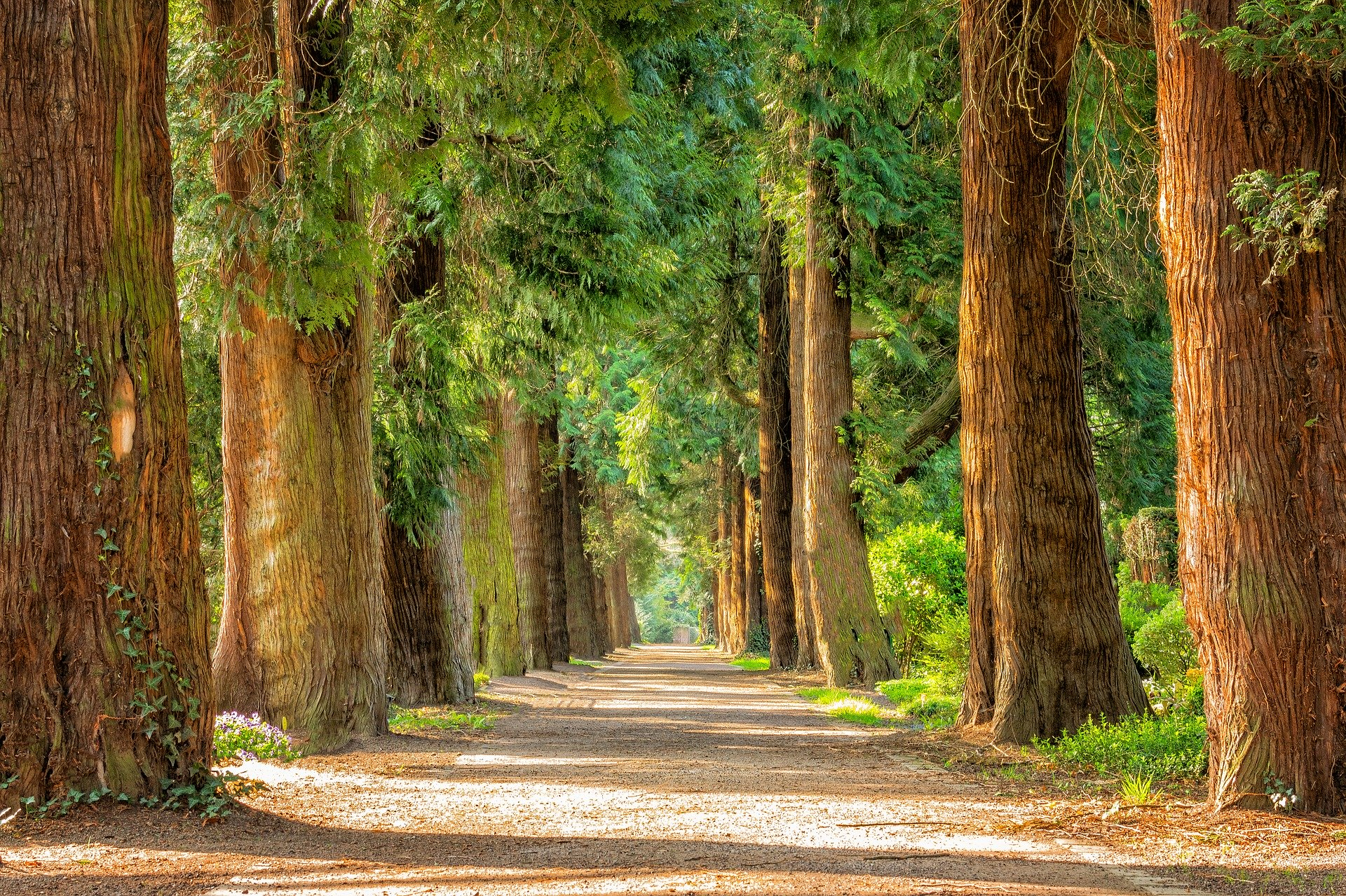 ALERT RCB: Otwarte parki i lasy