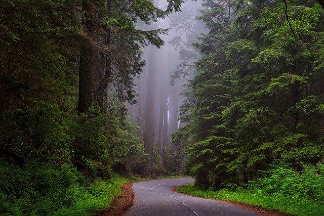 Jak się znaleźć w lesie?