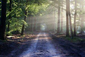 Read more about the article Jak przygotować się na wycieczkę do lasu?