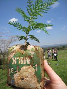 Jak posadzić drzewo?
