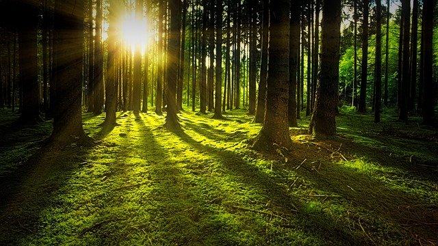 Energia z drewna