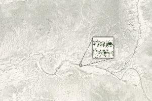 Liczenie drzew na suchych terenach Afryki