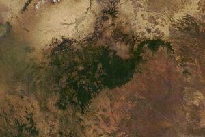 Etiopski las w chmurach