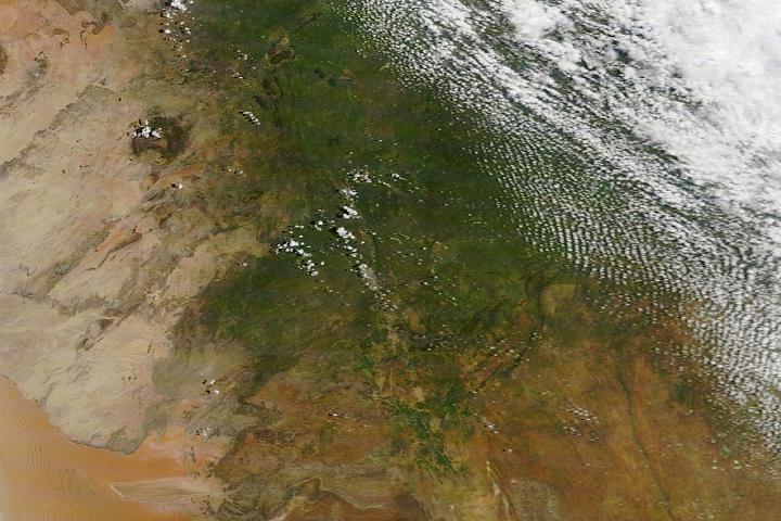 You are currently viewing Obfite deszcze sprawiają, że Namibia staje się zielona