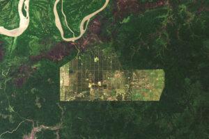 Wylesianie w Papui