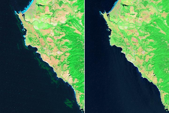 You are currently viewing Monitorowanie zapadania się lasów wodorostów