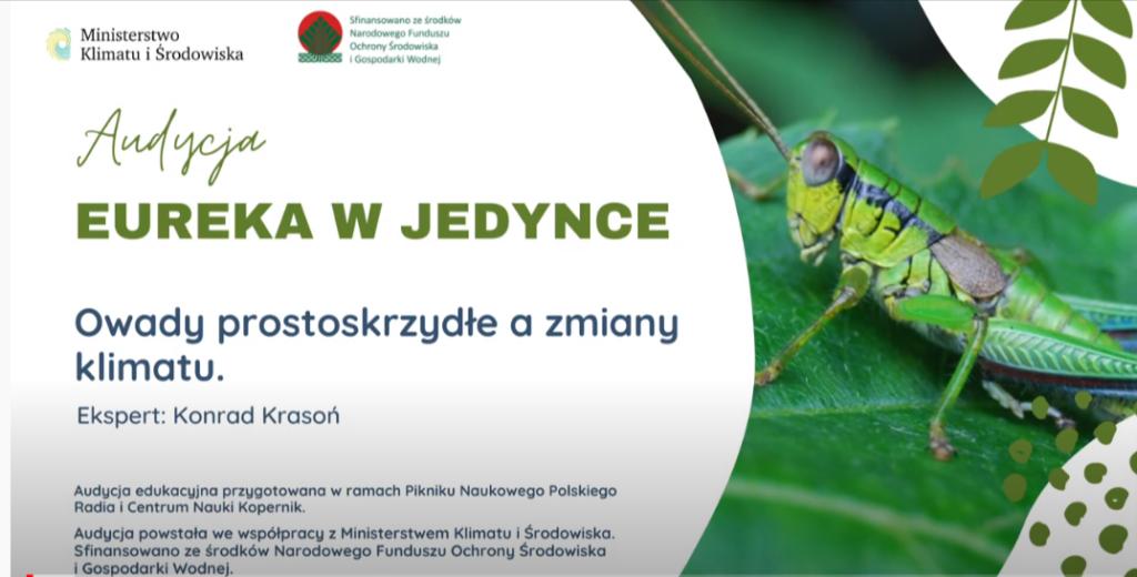 Read more about the article Audycja Eureka w Jedynce. Temat: Owady prostoskrzydłe a zmiany klimatu.