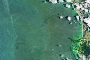 Read more about the article Glony obfitują wzdłuż wybrzeża Florydy