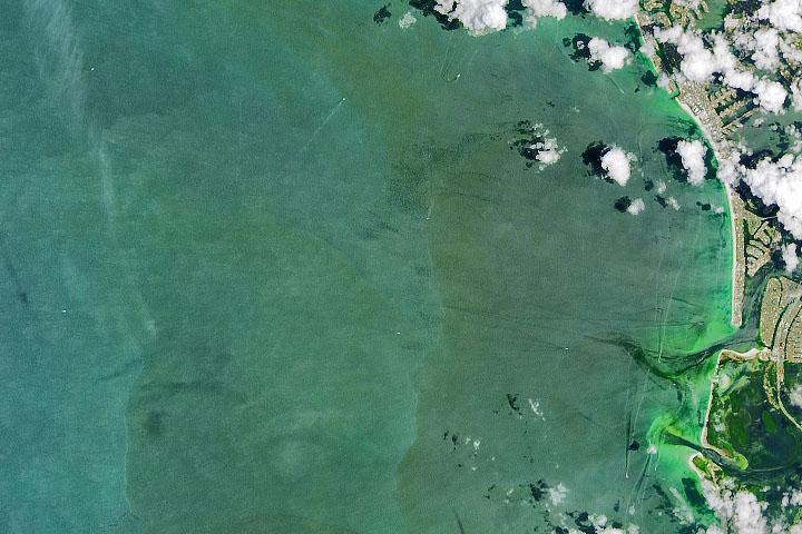 You are currently viewing Glony obfitują wzdłuż wybrzeża Florydy