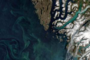 Read more about the article Autotrofy obfitują w wodach arktycznych