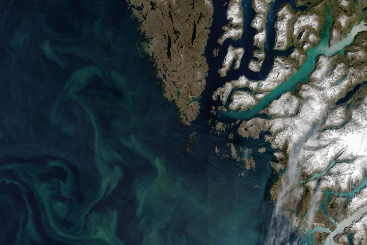 You are currently viewing Autotrofy obfitują w wodach arktycznych