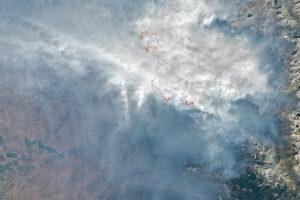 Read more about the article Ogień wkraczający na gigantyczne sekwoje