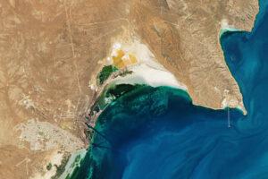 Read more about the article Naprawdę gigantyczne mątwy w False Bay