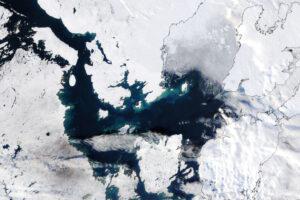 Read more about the article Późne rozkwitanie w Arktyce